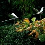 Vlinders (roestvrijstaal) 60 x 25 cm €50,- (per stuk)